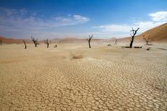 Sossusvlei desert, Namibia. Dead trees between the red dunes of Sossusvlei desert, Namibia stock images