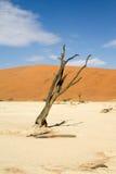 Sossusvlei desert, Namibia. Dead trees between the red dunes of Sossusvlei desert, Namibia stock image