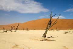 Sossusvlei desert, Namibia. Dead trees between the red dunes of Sossusvlei desert, Namibia Stock Image
