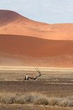 Sossusvlei desert, Namibia Royalty Free Stock Photo
