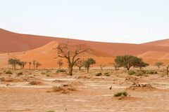 Sossusvlei desert, Namibia. The red dunes of Sossusvlei desert at the sunset, Namibia royalty free stock photos