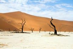 Sossusvlei desert, Namibia. The red dunes of Sossusvlei desert at the sunset, Namibia Stock Photos
