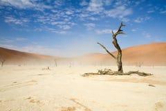 Sossusvlei desert, Namibia. A windy Sossusvlei desert, Namibia royalty free stock photo