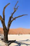 Sossusvlei doliny nieżywy krajobraz w Nanib pustynny pobliski Sesrie Zdjęcie Stock