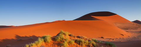 Sossusvlei dune in the early morning light Royalty Free Stock Image