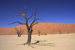 Sossusvlei Dune National park. Sossusvlei and the deadvlei where the 600 year old petrified trees sit on a dried up lake bed Stock Photo
