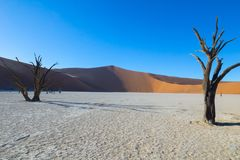 Sossusvlei dunes at Dead Vlei. With lens flare, old trees,orange dunes and white salt pan royalty free stock photos