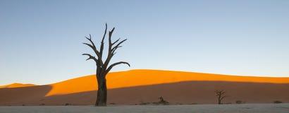 Sossusvlei dunes at Dead Vlei. Old dead trees,orange dunes and white salt pan stock photos