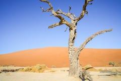 Sossusvlei dunes at Dead Vlei. Old trees,orange dunes and white salt pan royalty free stock photo
