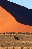 Sossusvlei dunes. Red dunes on the road to Sossusvlei, Namibia Royalty Free Stock Photo