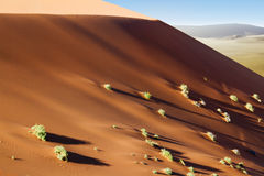 Sossusvlei dunes shrubs. Wandering dune of Sossuvlei in Namibia Royalty Free Stock Photos