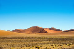 Sossusvlei dunes at sunny day Stock Photos
