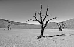 Sossusvlei em Namíbia Fotos de Stock