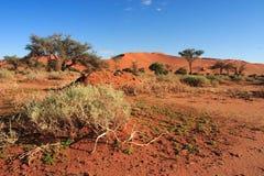 Sossusvlei en el desierto de Namib Foto de archivo