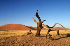 Sossusvlei en Namibia Fotos de archivo libres de regalías