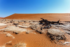 Sossusvlei härligt landskap av Death Valley Royaltyfri Fotografi