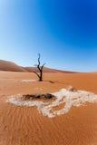 Sossusvlei härligt landskap av Death Valley Arkivfoton