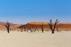 Sossusvlei härligt landskap av Death Valley Arkivbild