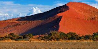 Sossusvlei, het Nationale Park van Namib Naukluft, Namibië royalty-vrije stock foto's