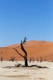 Sossusvlei härligt landskap av Death Valley Fotografering för Bildbyråer