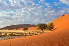 Sossusvlei landscape, Namibia. Sossusvlei landscape with Acacia trees and red sand dunes, Namibia, southern Africa Stock Photography