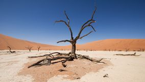 Sossusvlei, Namib desert Stock Photos