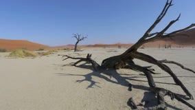 Sossusvlei in Namib desert , Namibia, Africa landscape stock video