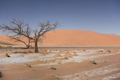 Sossusvlei in Namib Desert, Namibia. The Sossusvlei at the Namib-Naukluft National Park is a national park of Namibia part of the Namib Desert, considered the Stock Photo