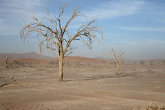 Sossusvlei Namib-Naukluft Royalty Free Stock Images