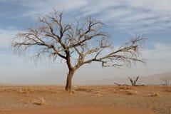 Sossusvlei Namib-Naukluft Stock Photos