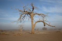 Sossusvlei Namib-Naukluft Stock Image