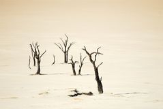 Sossusvlei, Namib Naukluft National Park, Namibia royalty free stock images