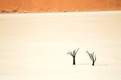 Sossusvlei, Namib Naukluft National Park, Namibia stock image