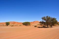 Sossusvlei, Namib Naukluft National Park, Namibia, Africa. Beautiful landscape with dunes and trees at sunrise, Sossusvlei, Namib Naukluft National Park, Namibia stock image