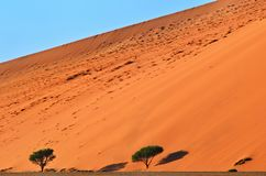 Sossusvlei, Namib Naukluft National Park, Namibia. Beautiful landscape with big dune and acacia trees at sunrise, Sossusvlei, Namib Naukluft National Park Stock Photos