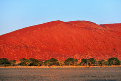 Sossusvlei, Namib Naukluft National Park, Namibia. Beautiful landscape with big red dunes and acacia trees at sunrise, Sossusvlei, Namib Naukluft National Park stock photography