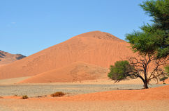 Sossusvlei, Namib Naukluft National Park, Namibia. Beautiful landscape with big red dunes and green trees at sunrise, Sossusvlei, Namib Naukluft National Park royalty free stock images