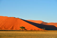 Sossusvlei, Namib Naukluft National Park, Namibia. Beautiful landscape with big red dunes and trees at sunrise, Sossusvlei, Namib Naukluft National Park, Namibia Royalty Free Stock Photos