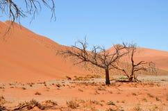 Sossusvlei, Namib Naukluft National Park, Namibia. Beautiful landscape with big red dunes and trees at sunrise, Sossusvlei, Namib Naukluft National Park, Namibia stock photo