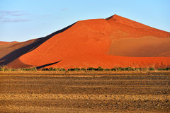Sossusvlei, Namib Naukluft National Park, Namibia. Beautiful landscape with big red dunes and trees at sunrise, Sossusvlei, Namib Naukluft National Park, Namibia stock photos