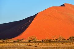 Sossusvlei, Namib Naukluft National Park, Namibia. Beautiful landscape with big red dunes and trees at sunrise, Sossusvlei, Namib Naukluft National Park, Namibia royalty free stock photography
