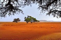 Sossusvlei, Namib Naukluft National Park, Namibia. Beautiful landscape of the Namib desert at rainy evening, Sossusvlei, Namib Naukluft National Park, Namibia Stock Photos