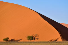 Sossusvlei, Namib Naukluft National Park, Namibia. Beautiful landscape with dune 45 and trees at sunrise, Sossusvlei, Namib Naukluft National Park, Namibia Royalty Free Stock Photo