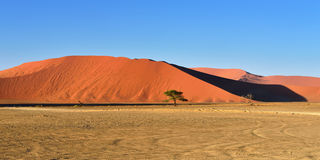 Sossusvlei, Namib Naukluft National Park, Namibia. Beautiful landscape with dune 45 and trees at sunrise, Sossusvlei, Namib Naukluft National Park, Namibia Stock Photos