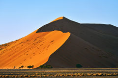 Sossusvlei, Namib Naukluft National Park, Namibia. Beautiful landscape with dune 40 and trees at sunrise, Sossusvlei, Namib Naukluft National Park, Namibia Royalty Free Stock Photo