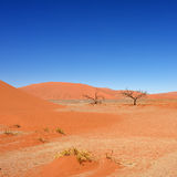 Sossusvlei, Namib Naukluft National Park, Namibia Royalty Free Stock Images