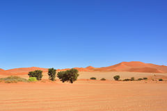 Sossusvlei, Namib Naukluft National Park, Namibia. Beautiful landscape with dunes and trees at sunrise, Sossusvlei, Namib Naukluft National Park, Namibia Royalty Free Stock Photos