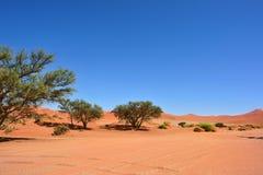 Sossusvlei, Namib Naukluft National Park, Namibia. Beautiful landscape with dunes and trees at sunrise, Sossusvlei, Namib Naukluft National Park, Namibia, Africa royalty free stock image