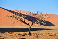 Sossusvlei, Namib Naukluft National Park, Namibia. Beautiful landscape with red dunes and dead tree at sunrise, Sossusvlei, Namib Naukluft National Park, Namibia Stock Photos