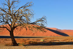 Sossusvlei, Namib Naukluft National Park, Namibia. Beautiful landscape with red dunes and tree at sunrise, Sossusvlei, Namib Naukluft National Park, Namibia Stock Photo